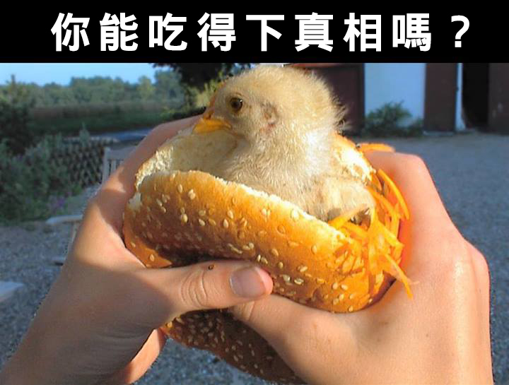 chick burger