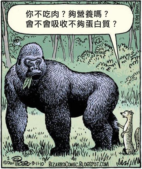 gorilla-protein1 copy