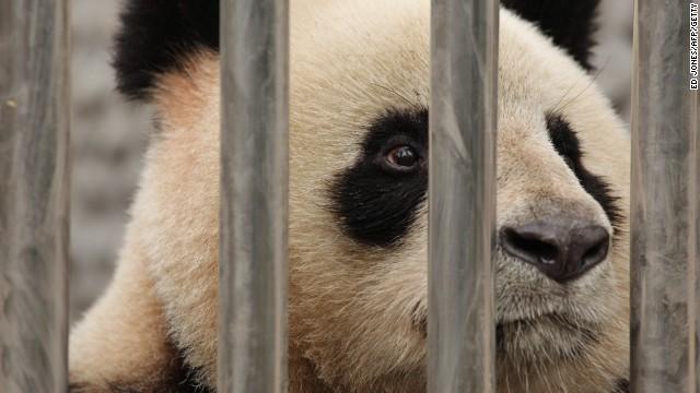 140218124513-panda-file-story-top
