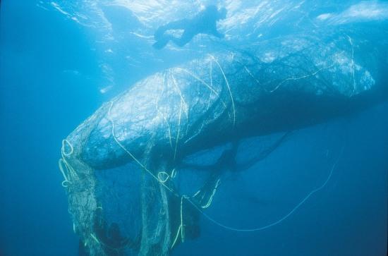 http://www.slideshare.net/MrJewett/overfishing