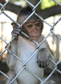 animals-in-zoos-200x275