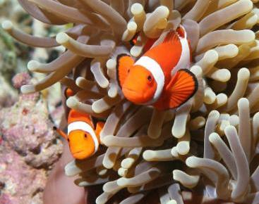 http://www.peta.org/blog/guess-fish-swimming-vegetables/