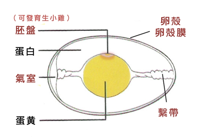 eggstructure