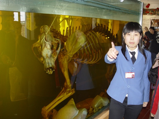 harbin_tiger_bone_wine