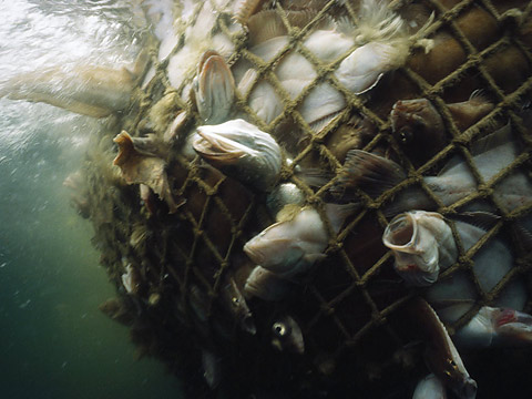 http://seawayblog.blogspot.hk/2009/03/overfishing-doom-of-our-oceans.html