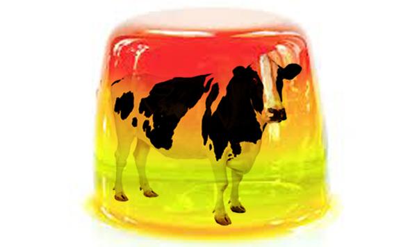 jellycow