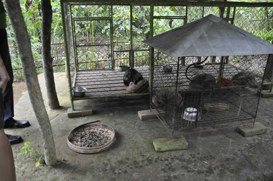 Caged-civets-4