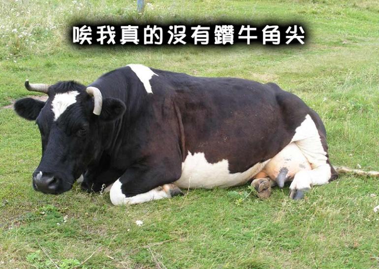 cow_7