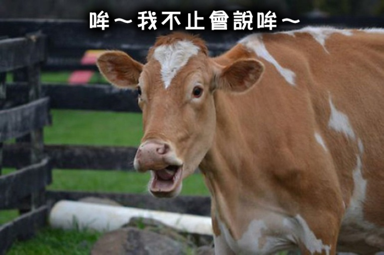 cow_8