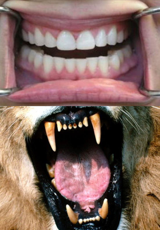 teeth-comparison
