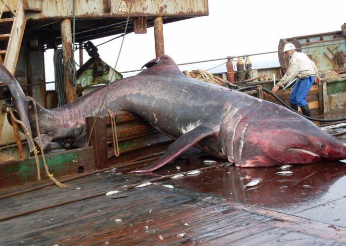 shark_07