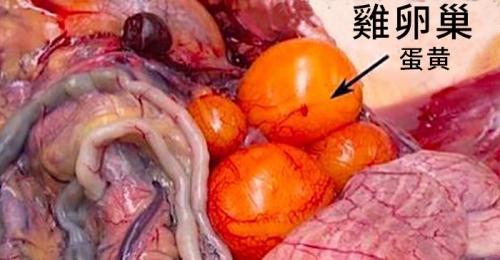 chicke-ovary
