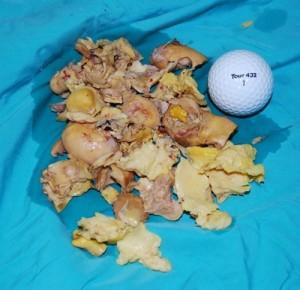 在患病的母雞子宮內移除重達1磅的腐爛雞蛋  圖片提供: Peter Sakas