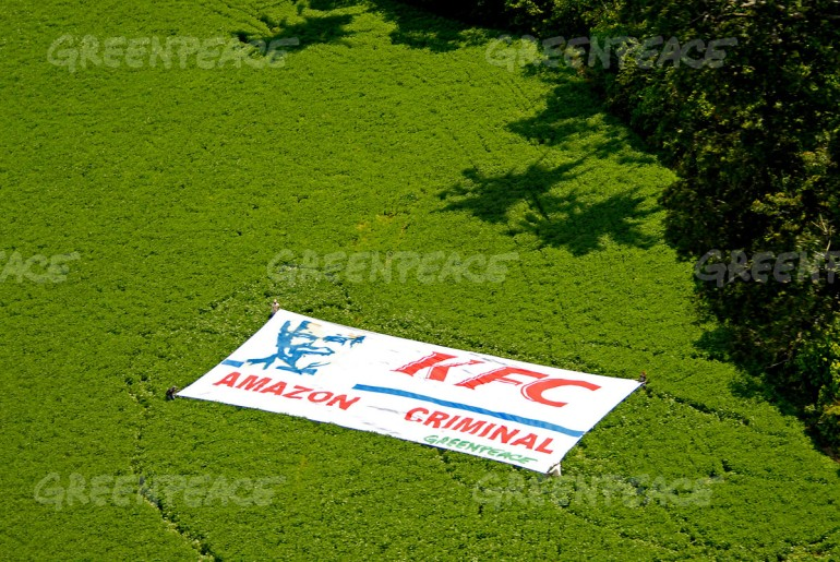 May 17th 2006. Santarem (Amazon, Para State, Brazil). Activists deployed a banner in a soya plantation near Santarem to protest against Kentucky Fried Chicken who uses chicken fed with Amazon soya sold by Cargill in their stores. The expansion of soya is